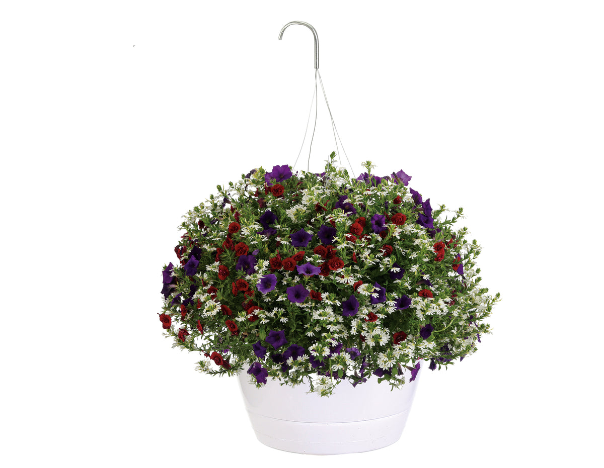 Proven Winners® Patio Plants|Lady Liberty Combination Hanging Basket 1