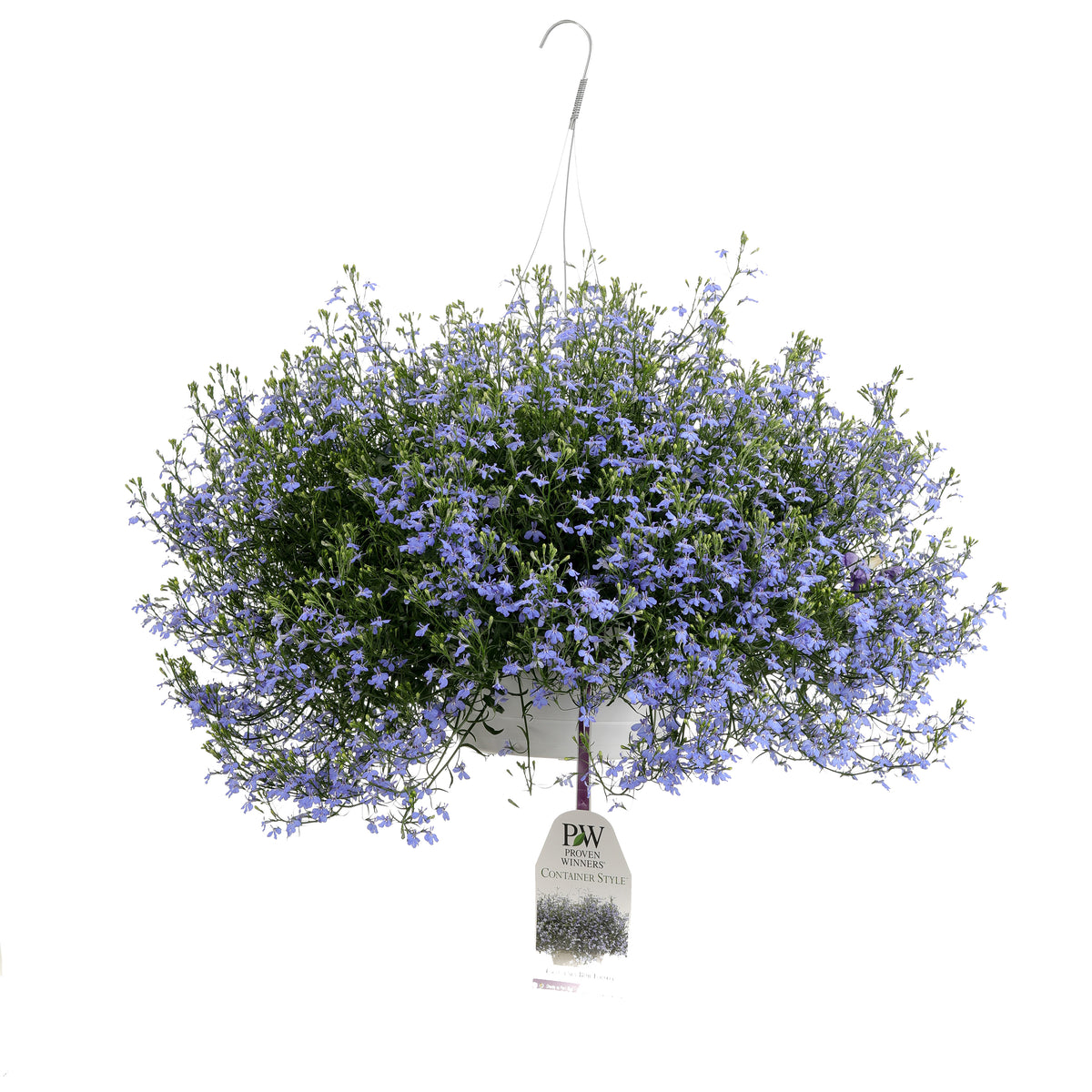 Patio Plants|Lobelia - Laguna Sky Blue Mono Hanging Basket 1