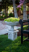Proven Winners® Patio Plants|Sedum - Lemon Coral Mono Hanging Basket 3