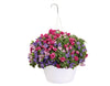 Proven Winners® Patio Plants|Loads of Fun Combination Hanging Basket 1