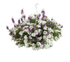 Proven Winners® Patio Plants|Luna Combination Hanging Basket 1