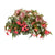 Proven Winners® Patio Plants|Lyra Combination Hanging Basket 1
