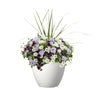 Proven Winners® Patio Plants|Storm Cloud Upright Combination 1