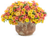Proven Winners® Annual Plants|Calibrachoa - Superbells Coralina 2