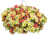 Proven Winners® Annual Plants|Calibrachoa - Superbells Coralina 4