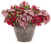 Superbells® Double Ruby (Calibrachoa)