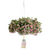 Patio Plants|Calibrachoa - Superbells Holy Cow! Mono Hanging Basket 1