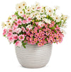 Proven Winners® Annual Plants|Calibrachoa - Superbells Honeyberry 4