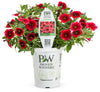 Proven Winners® Annual Plants|Calibrachoa - Superbells Pomegranate Punch 4