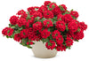 Proven Winners® Annual Plants|Verbena - Superbena Red 2