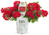 Proven Winners® Annual Plants|Verbena - Superbena Red 4
