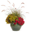 Proven Winners® Annual Plants|Verbena - Superbena Red 5
