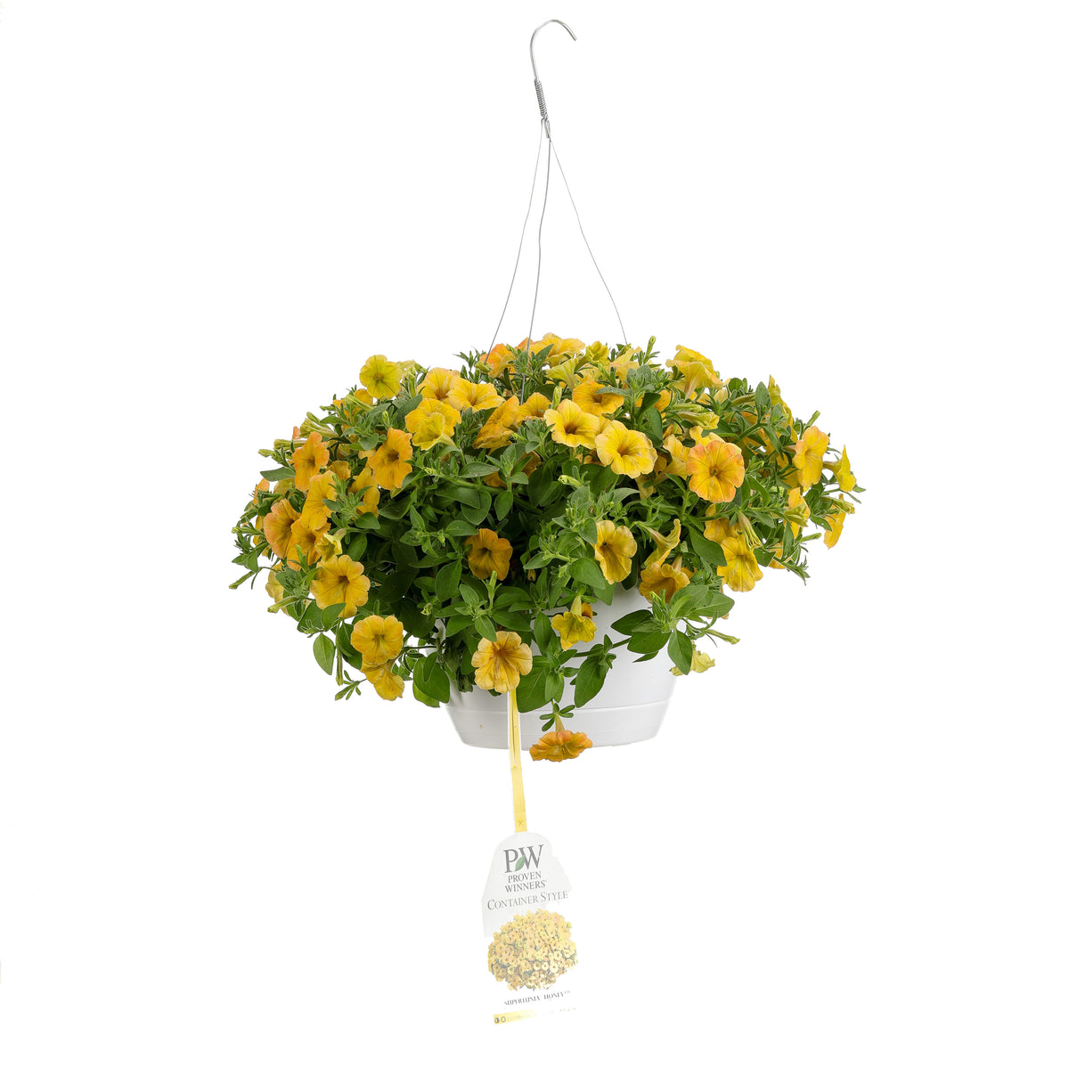 Patio Plants|Petunia - Supertunia Honey Mono Hanging Basket 1