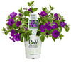 Proven Winners® Annual Plants|Petunia - Supertunia Mini Vista Indigo 4