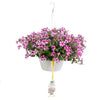 Patio Plants|Petunia - Supertunia Lovie Dovie Mono Hanging Basket 1