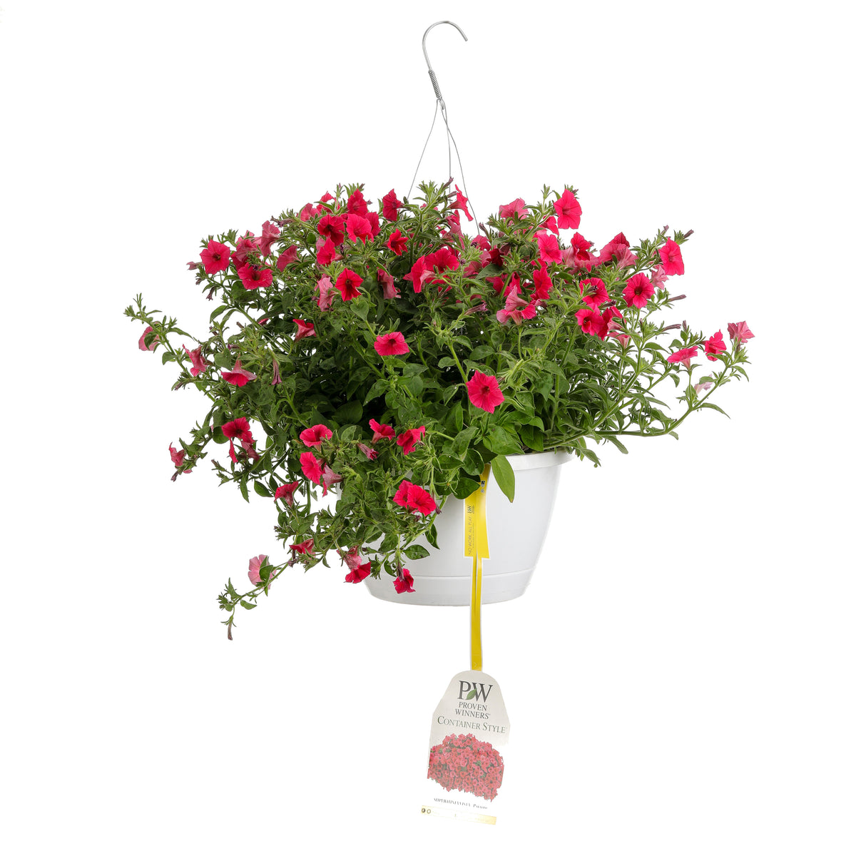 Patio Plants|Petunia - Supertunia Vista Paradise Mono Hanging Basket 1