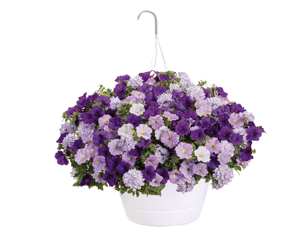 Proven Winners® Patio Plants|True Beauty Combination Hanging Basket 1