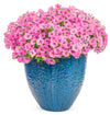 Patio Plants|Petunia - Supertunia Vista Bubblegum Mono Hanging Basket  1