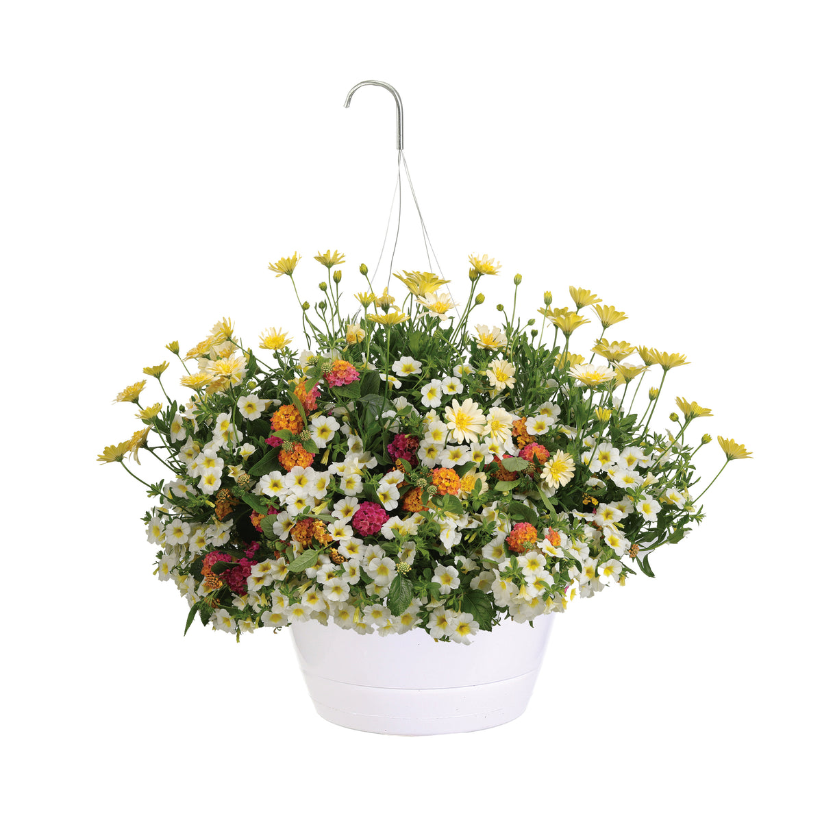 Proven Winners® Patio Plants|Wish Combination Hanging Basket 1