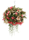 Proven Winners® Patio Plants|Zingara Combination Hanging Basket 1