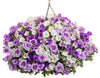 Proven Winners® Patio Plants|My Crush Combination Hanging Basket 1