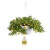 Patio Plants|Calibrachoa - Superbells Lemon Slice Mono Hanging Basket 1