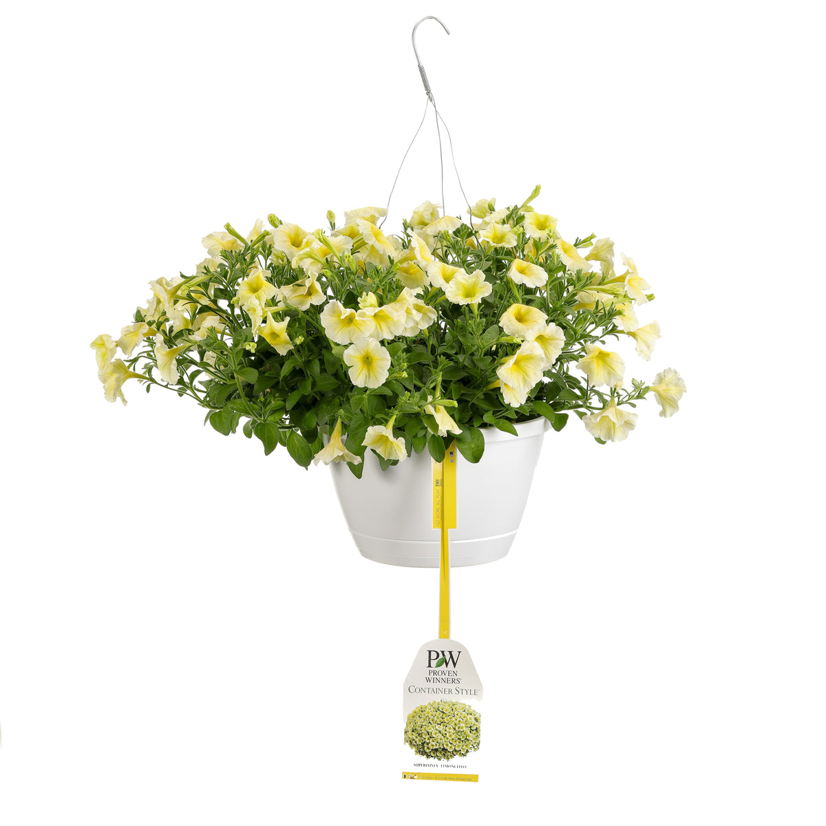 Patio Plants|Petunia - Supertunia Limoncello Mono Hanging Basket 1