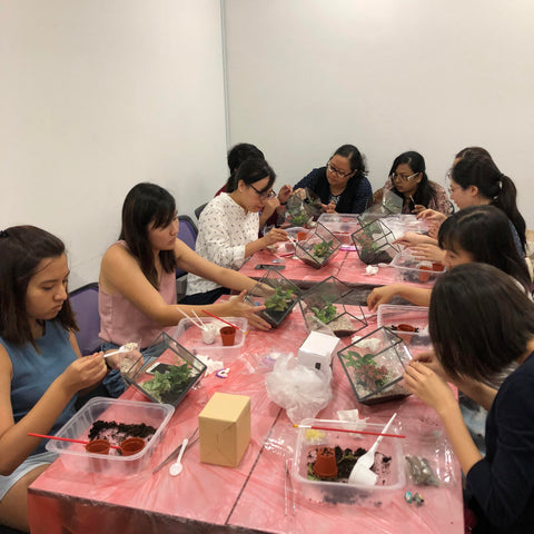Terrarium Workshop With NTU SOH Alumni Association