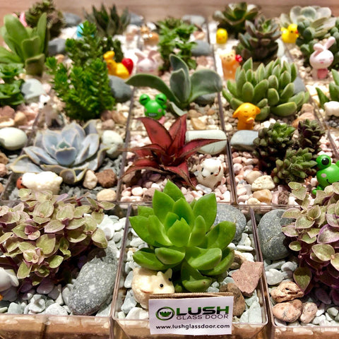 Customized succulent square pots for corporate gifts