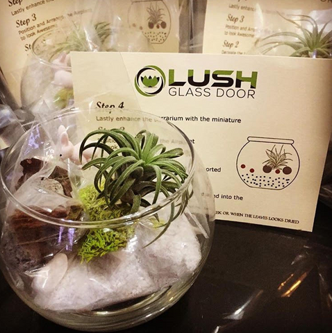 Birthday Door Gifts Airplant Terrarium DIY Kit by Lush Glass Door
