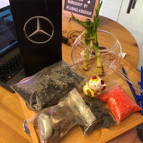 Online Virtual Terrarium Workshop with Cycle & Carriage