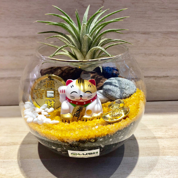 Cute Aislinn Auspicious Airplant Terrarium  by Lush Glass Door Singapore