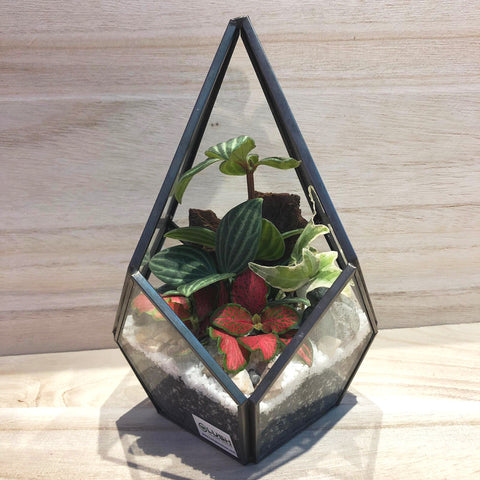 Kell Fittonia Arrangement in Teardrop Geometric Terrarium