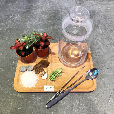 Fun & Therapeutic Terrarium Workshop Package C by Lush Glass Door