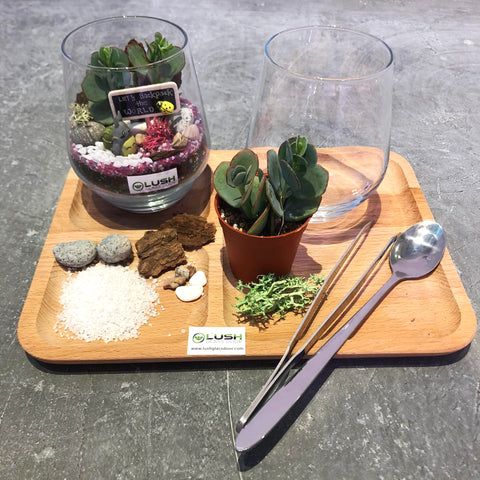 Terrarium Workshop Package B by Lush Glass Door