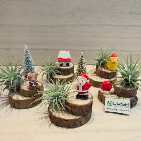 Christmas Themed Cute Airplant with Miniature on Wooden Stumps