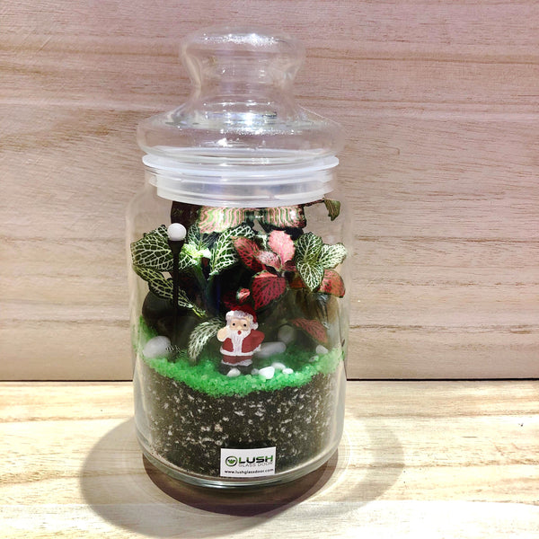 Santa Baby Fittonia Story Jar Terrarium by Lush Glass Door