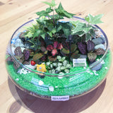 2 Sided! Elize Tropical Plants Arrangement Premium Terrarium