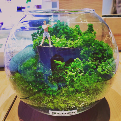 Customized Whitford Holland Moss Bowl Terrarium by Lush Glass Door Singapore