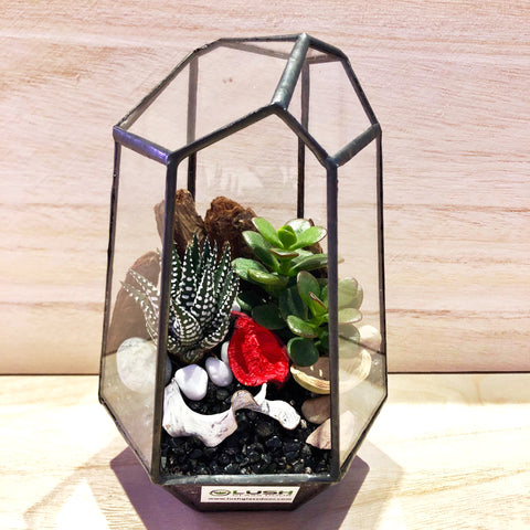 Cecilia Succulents Arrangement in Diamond Shape Geometric Terrarium by Lush Glass Door