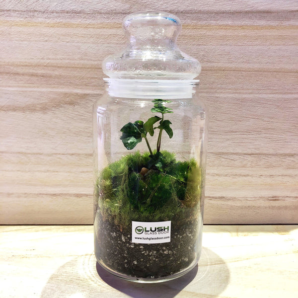 Kenya Holland Moss Story Jar Terrarium by Lush Glass Door