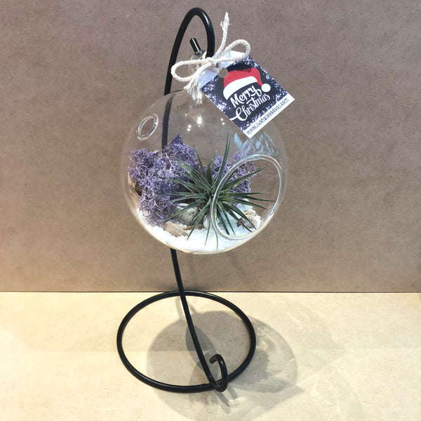 Customized Callie Airplant Hanging Globe Terrarium by Lush Glass Door Singapore
