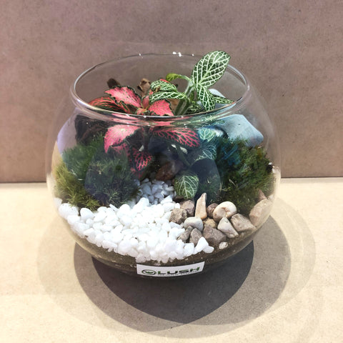 Customized Broderick Rustic Bowl Terrarium  by Lush Glass Door Singapore