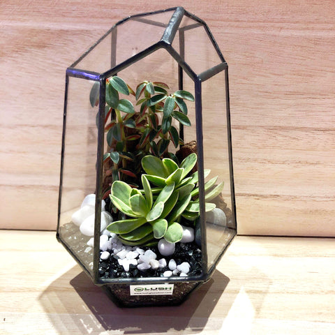 Serendipity Succulents Arrangement in Diamond Shape Geometric Terrarium