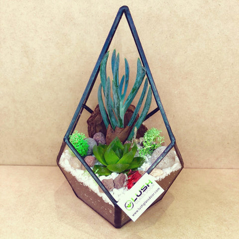 Customized Adria Succulents Arrangement in Teardrop Geometric Terrarium by Lush Glass Door Singapore