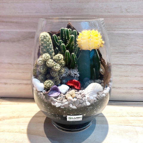 Beautiful Sunrise Desert Cactus Terrarium