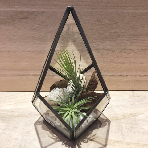 Zenya Airplant Teardrop Geometric Terrarium