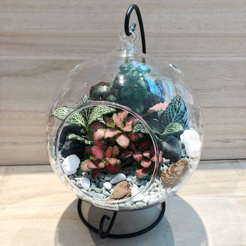 Anastasia Fittonia Arrangement in Hanging Globe Terrarium (L)