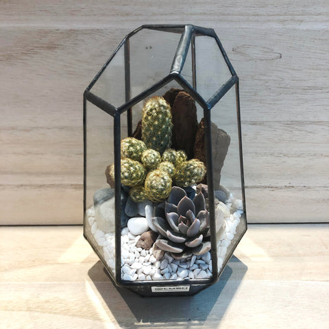 Lawson Succulents Arrangement in Diamond Shape Geometric Terrarium