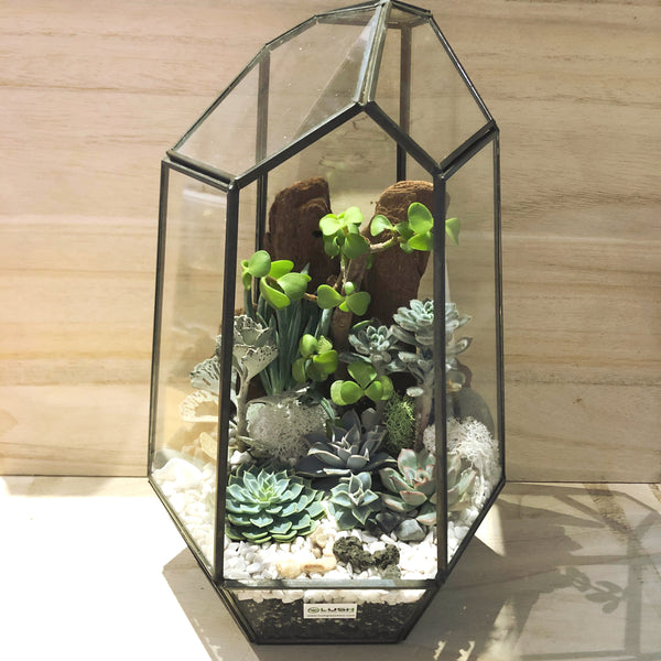 Klay Succulents Arrangement in Diamond Shape Geometric Terrarium (XL)